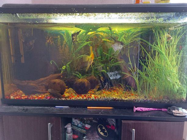 Akwarium 200l szafka filtr grzalka życie rośliny