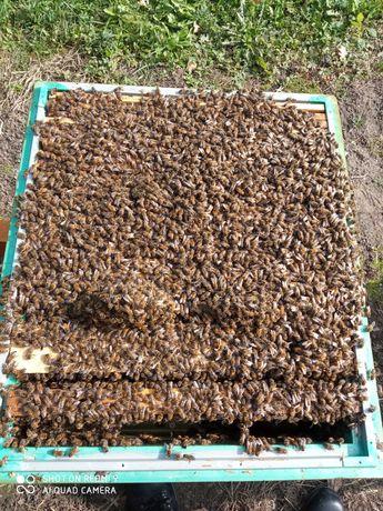 Sprzedam odkłady pszczele na ramce wielkopolskiej 18
