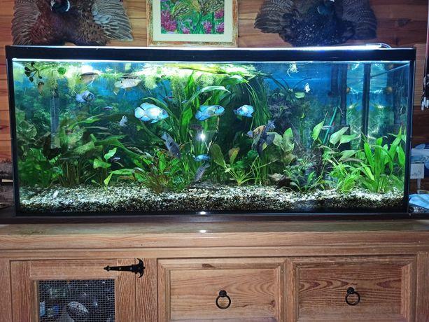 Akwarium 240 Litrów z życiem