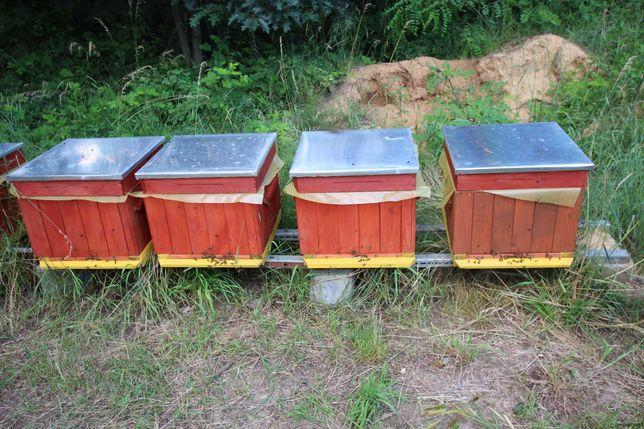 zdrowe pszczoły ul ule wielkopolski miód pasieka rodziny odklady