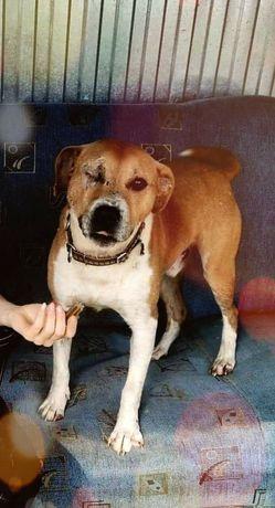 Kochany pies do adopcji za darmo  pomoc w transporcie
