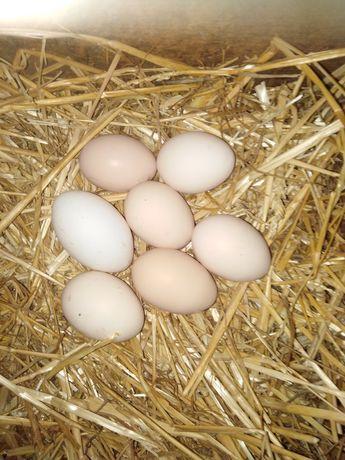 Jajka wiejskie naturalne