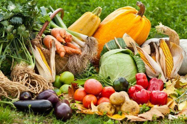 Świeże warzywa z ogrodu(pomidory,ziemniaki, buraki, cebula,  marchewka