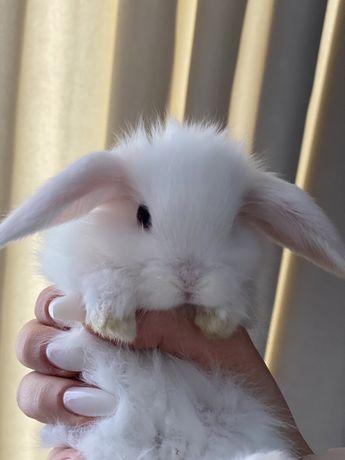 Голландские Карликовие кролики
