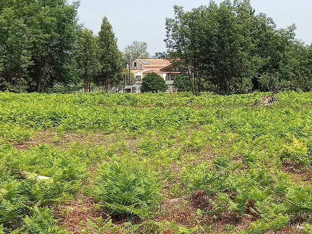 12.000m² de terreno frutífero, com 3 anexos de apoio ao agricultor