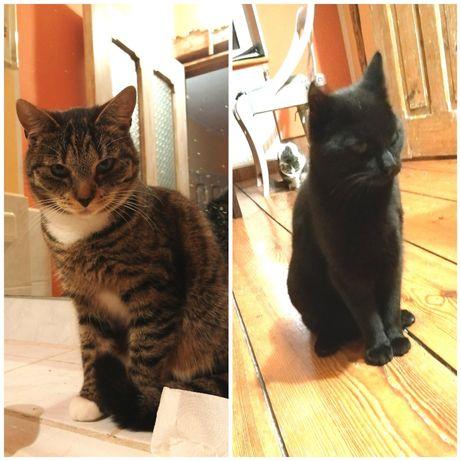 Wymagające  kocie rodzeństwo szuka wspólnego domu