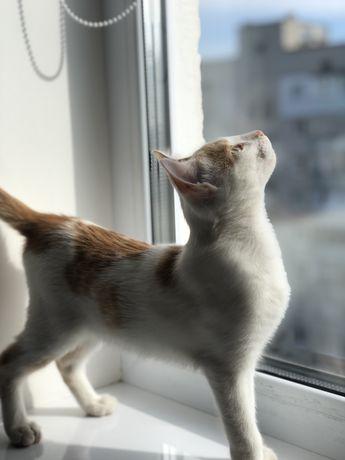 Котёнок Абрикос в хорошие добрые руки кот Котятя котик кошеня кіт
