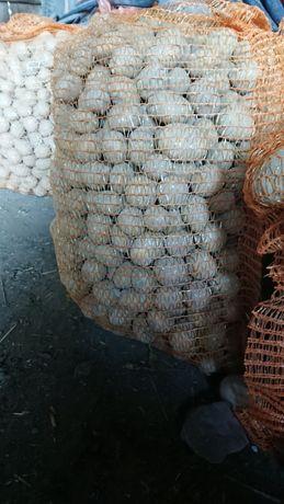 Ziemniaki drobne, odpadowe
