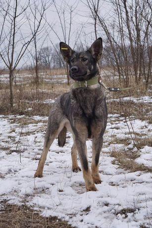 Потерялась собака в с. Петропаловское, с. Мартусовка! Пропала Собака.