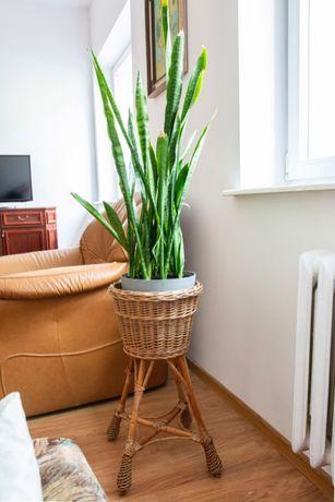 Przestronne mieszkanie do wynajęcia