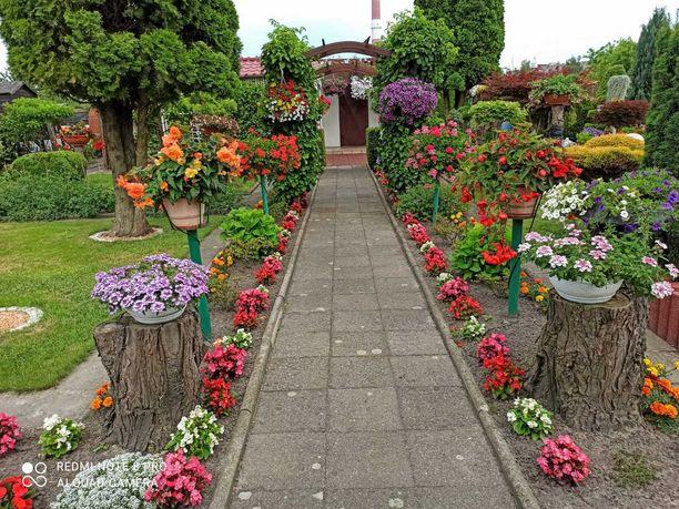 Sprzedam ogródek działkowy Nikiszowiec ROD Jaśmin