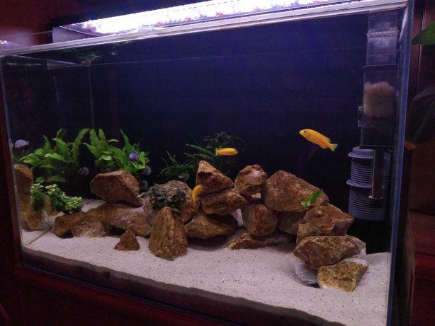Akwarium 150l + sprzęt + fauna + flora