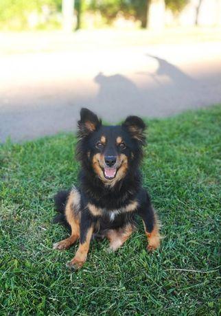 Собачка Бэлла ждет своего хозяина!