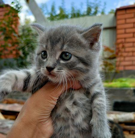 Котята маленькая кошечка