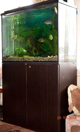 продам аквариум 280 л СРОЧНО!!!