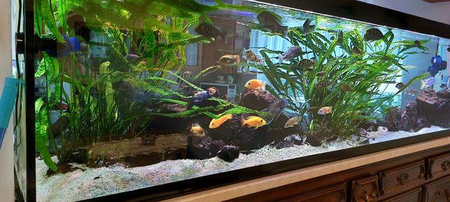 Akwarium 1100l kompletne wraz z życiem oraz wiele dodatków