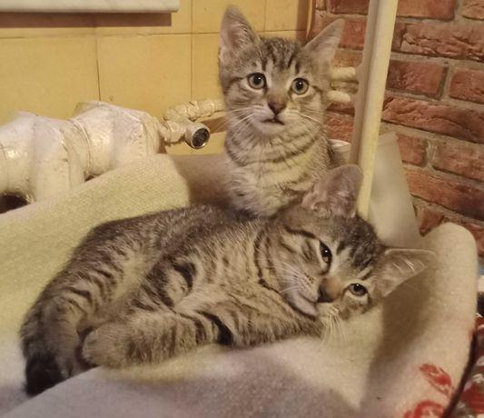 Dwie cudne koteczki do adopcji