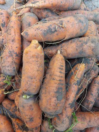 Продам домашнюю морковку сорта бомба