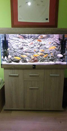 Piękne Akwarium Diversa 200l z pełnym wyposażeniem i Obsadą Pyszczaków