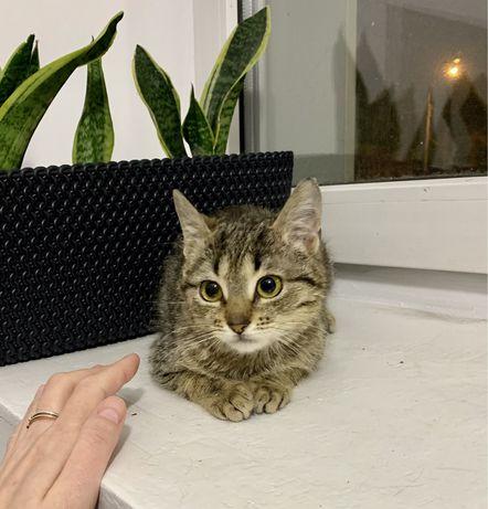 Котенок Мая, 2-3 месяца