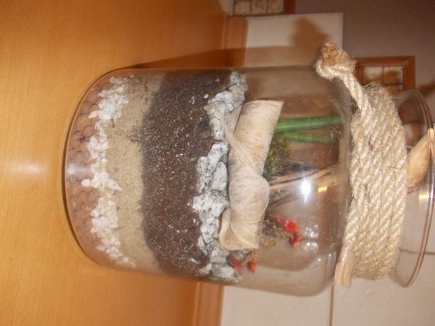 Ogródek domowy - sukulenty w szklanym słoju