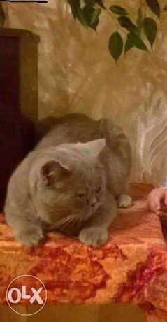 Опитний кіт шукає кішечку