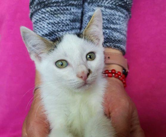 Плямисте кошеня, маленький котик Халіф,2 міс. в сім'ю, в добрі руки