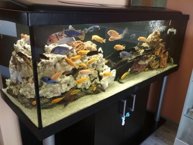 Sprzedam całe akwarium z zawartością 375 l (150×50×50)