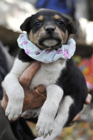 Одномесячный щенок живёт в опасном месте! Киев