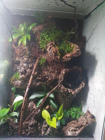 Terrarium 40x40x60 dla gekonów, felsum oraz drzewolazow