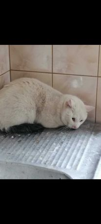 Pilne! Kot po śmierci właścicielki potrzebuje domu