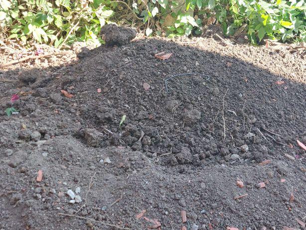 Dou Terra Boa para Jardinagem