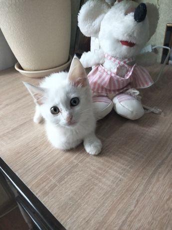 Котенок в поисках любящей семьи!