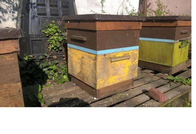 Ule Wielkopolskie z pszczołami