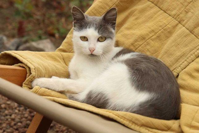 Котёнок, девочка, Запорожье