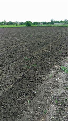 Земля огород  в аренду