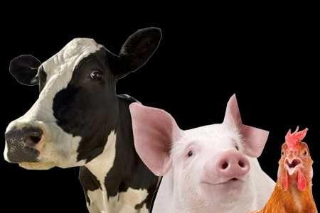 Dodatki paszowe dla bydła, drobiu, trzody, królików, koni, gołębi