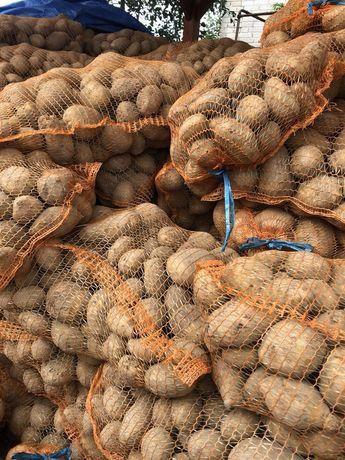 Ziemniaki odpadowe paszowe
