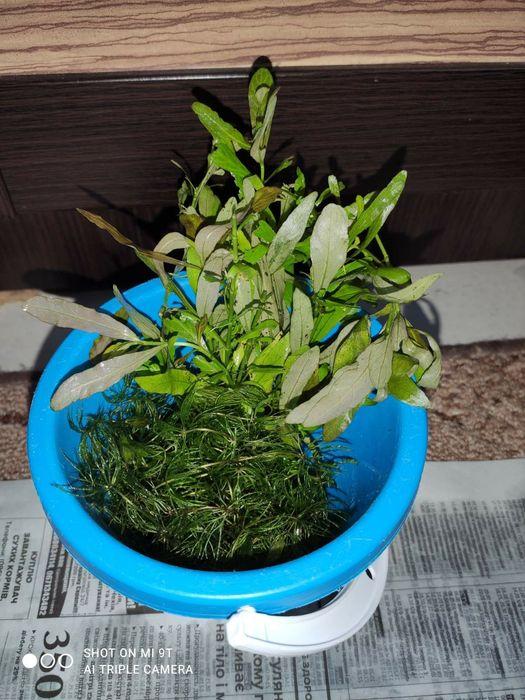 Растения для аквариума Кропивницкий - изображение 1
