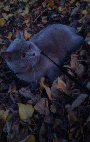 Досвідчений котик на вязку