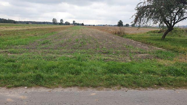Działka rolna Studzianki