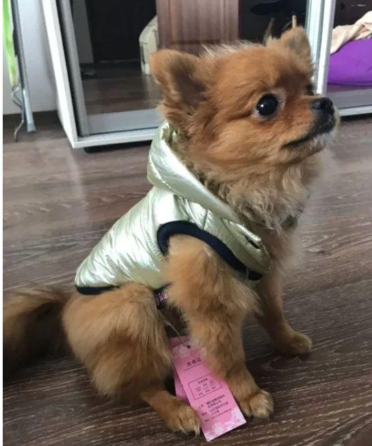 Зимняя теплая одежда для собак Київ - зображення 1