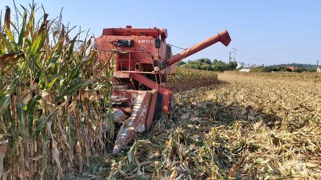 Ceifeira debulhadora milho (prestação serviço)