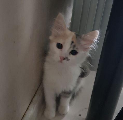 Котенок котик кошечка киса