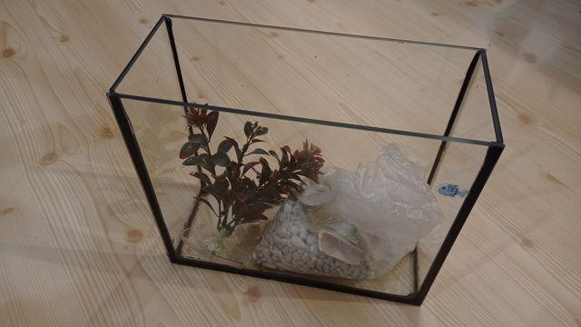 Akwarium, zestaw żwirek i roślinka