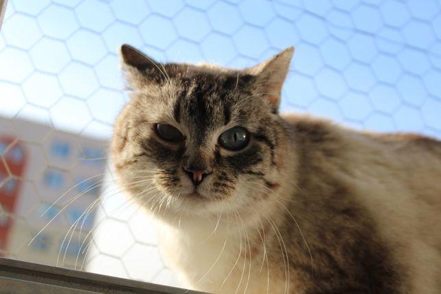 Dasza z Fundacji Kocia Klitka - szuka domu