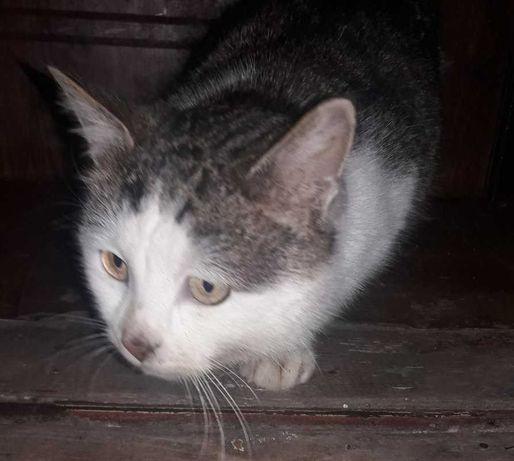Котик срочно ищет дом