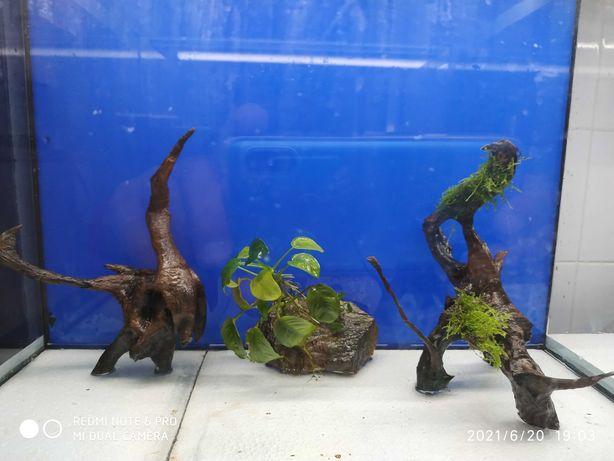 vendo/troco aquario.. troncos.sump, filtros, Discus