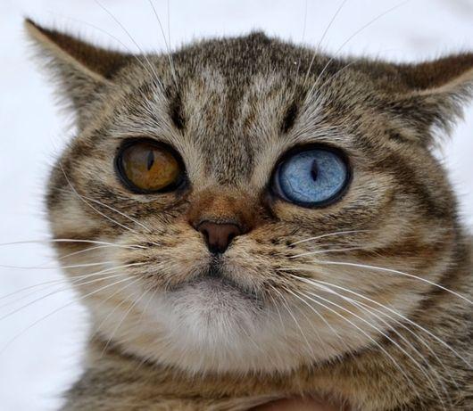Кнопа мини кошечка с разными глазами