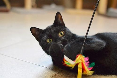 3 cudowne czarne kotki do adopcji :-)
